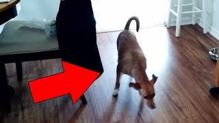 Cats and Dogs That Saw Something Their Owners Couldn't See : ESP and the Supernatural