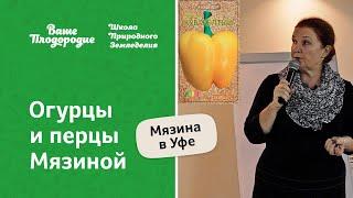Огурцы и перцы Мязиной