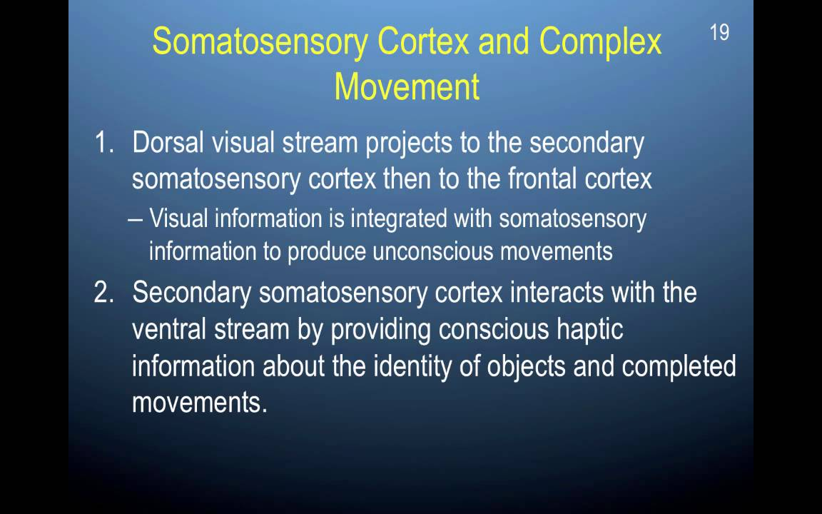 Chapter 11 Part 6 Processing Somatosensory Information In The Brain
