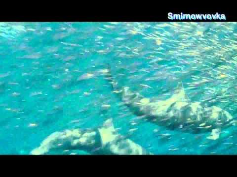 Daniel Wanrooy - Ocean Terrace (T4L Remix)(S.V 2010)