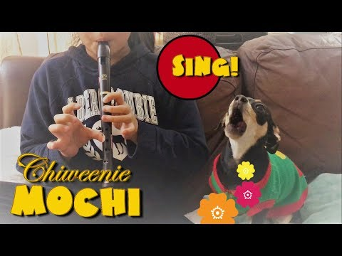 My Dog Sings - Mochi the Chiweenie Puppy