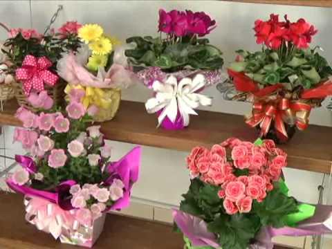 Significado das Flores no Dia dos Namorados
