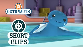 Octonauts: Learning About The Leather Back Sea Turtle