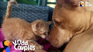 Dogs Who Love Other Animals | The Dodo Odd Couples