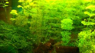 Mein 54l Aquarium