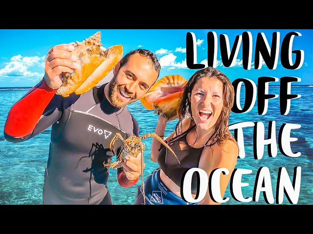 SPEAR FISHING CATCH N COOK | Living Off The Ocean On Sailboat