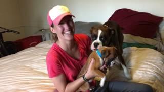 Moms Boxer Birthday Surprise (spoiler alert she got a new puppy)