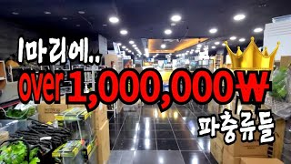 마리당 100만원이 넘어버리는 파충류 TOP10 fea…