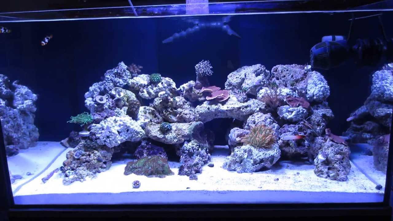 70 Gallon Cadlights Artisan II Reef Tank   YouTube