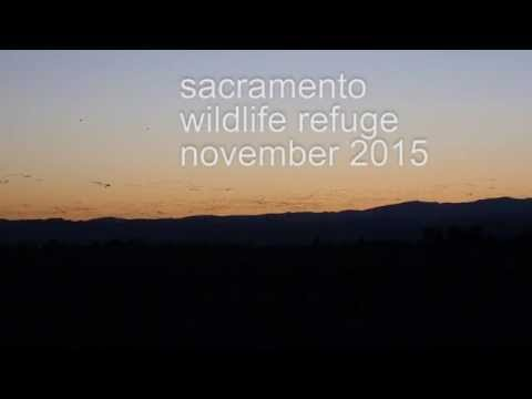 Abundance at the Sacramento Wildlife Refuge