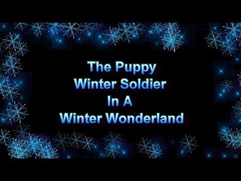 The Puppy Winter Soldier In A Winter Wonderland - Just Gin 2: Cutest Dog Ever! VOL. 35