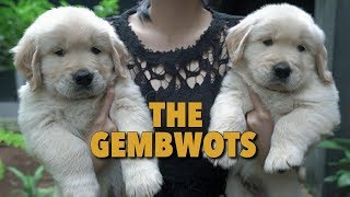 PUPPIES GEMBWOTS BUAT MOMMY PUSING! | UPDATE PUPPIES
