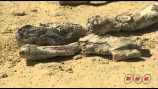 Wadi Al-Hitan (Whale Valley) (UNESCO/NHK)