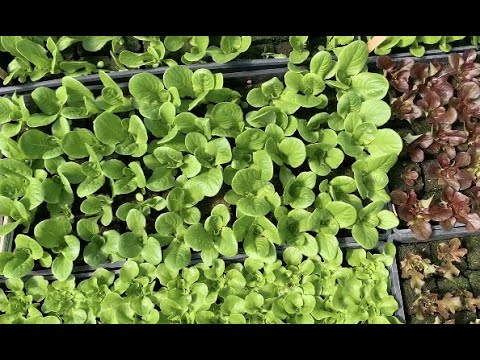 Dartmouth Organic Farm: Our Mission