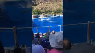 Dolphin days (show) at seaWorld Las Palmas Gran Canaria on 12/27/19