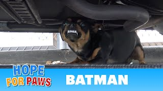 Homeless Batman lived under his Batmobile until Hope For Paws came to his rescue. thumbnail