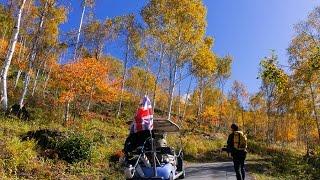 天空の遊覧カートは10月から天空の紅葉カートとして運行します。白樺、...