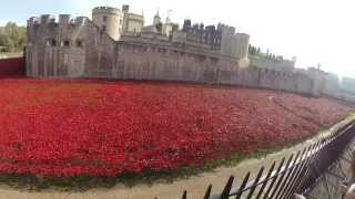 Poppies at The Tower of London - Blood Swept Lands and Seas of Red