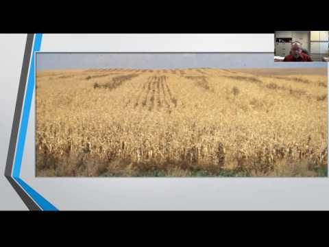 Reducing Input Costs in Sorghum Production