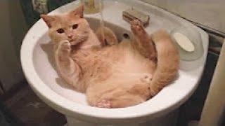 ТЕСТ НА ПСИХИКУ, ПОПРОБУЙ НЕ ЗАСМЕЯТЬСЯ - смешные приколы и фейлы с котами