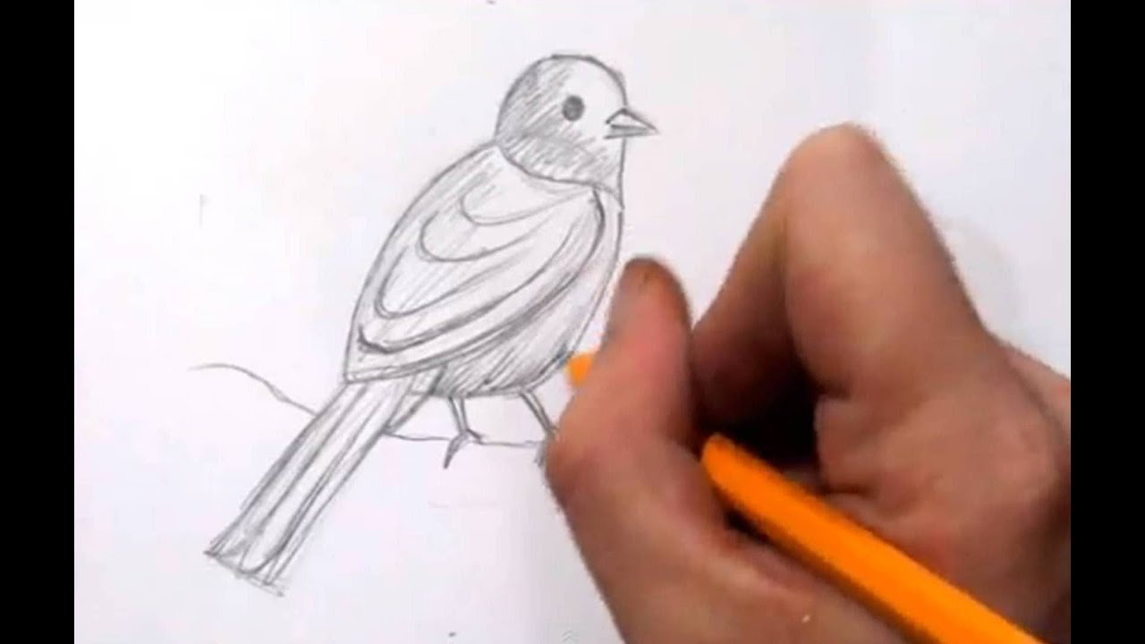 Uncategorized Draw A Picture how to draw a bird real time quick sketch youtube