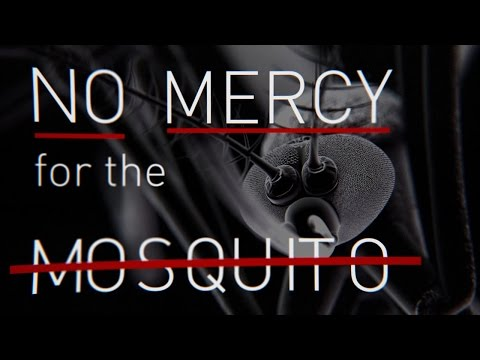 No Mercy for the Mosquito