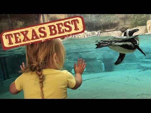 Texas Best - Zoo (Texas Country Reporter)