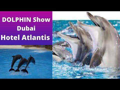 Dolphin Show Dubai | Hotel Atlantis The Palm Dubai