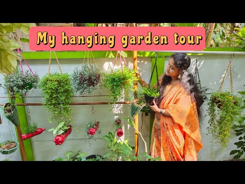 My Hanging Plant Collection I 50 verities of hanging plants