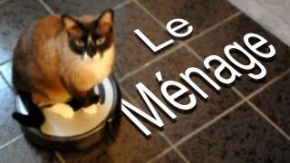 LE MÉNAGE - PAROLE DE CHAT