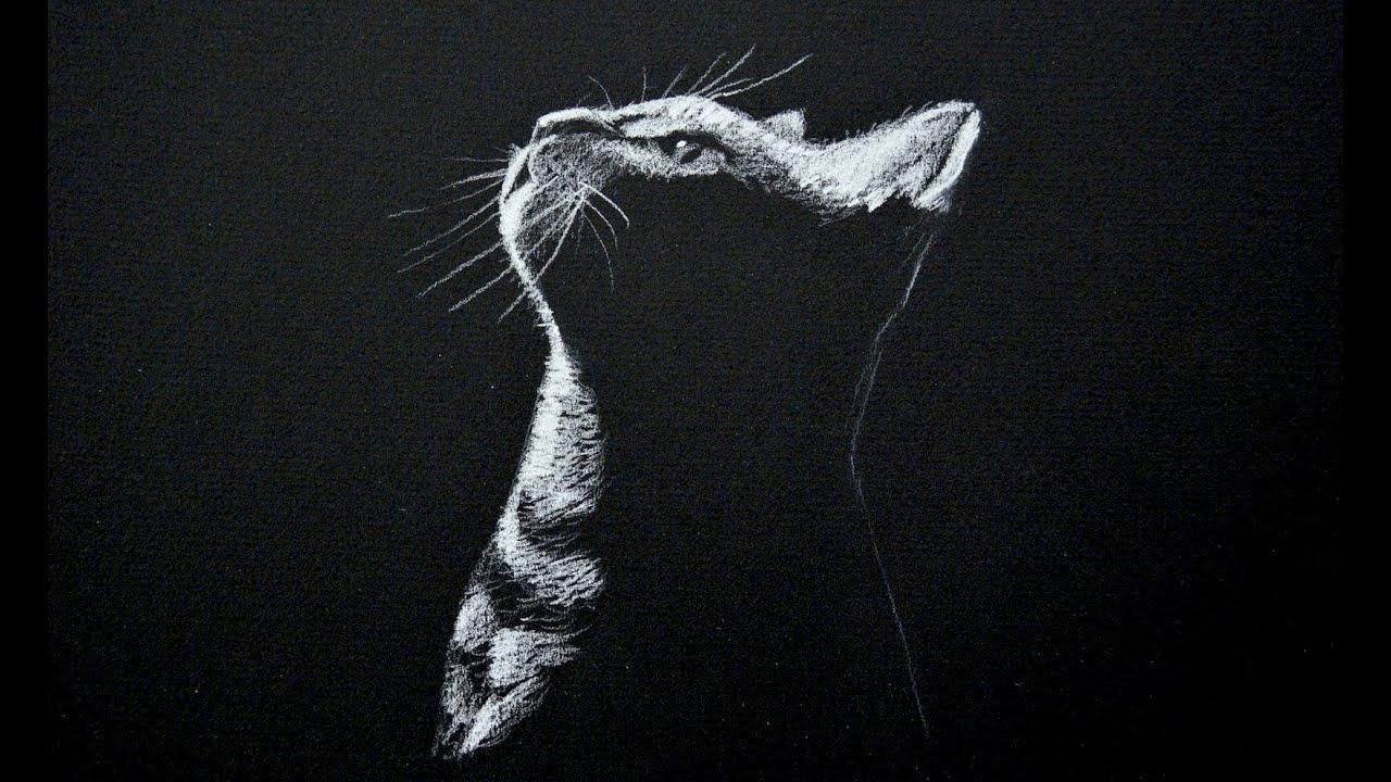 Dibujando un gato - blanco sobre negro (Time Lapse)- Arte Divierte ...