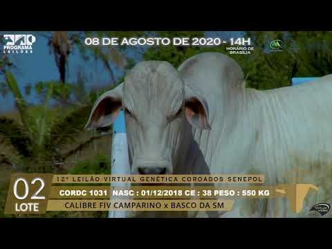 LOTE 02 CORD 1031