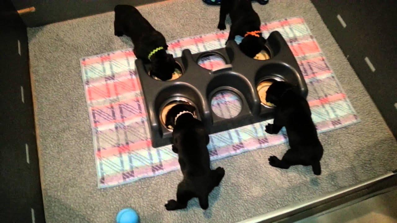 Weanafeeda Maxi 6 Dog Puppy Cat Amp Kitten Multiple Bowl