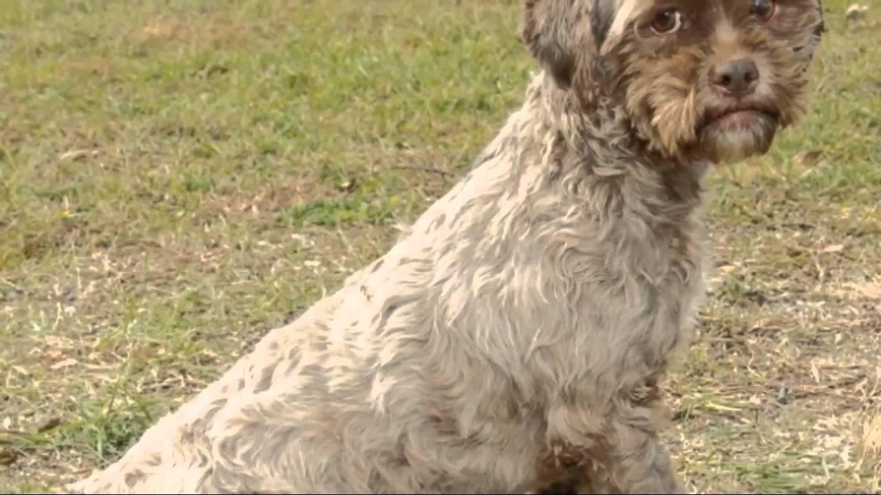 tonik dog with human face up for adoption   youtube