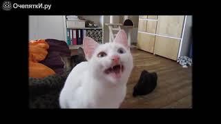 Замечательные приколы с кошками