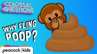 Why Do Chimps Fling Poop? | COLOSSAL QUESTIONS #CampYouTube #WithMe