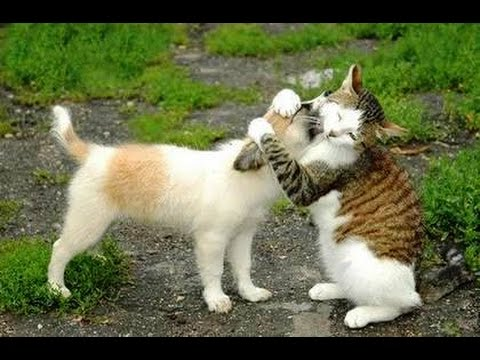 CATS or DOGS - Who is better? - Ultimate funny cats and dogs compilation