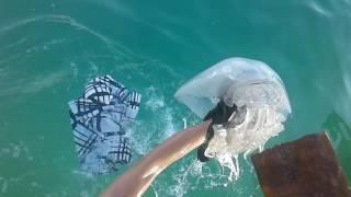 Анапа джемите пляж огромная медуза 2016