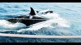 مالذي تقوله الحيتان في البحر؟؟ أمر جلل وغريب يحدث للأرض!!