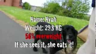 Pdsa Pet Fit Club Finalist - Nyah The Dog