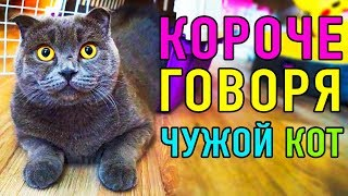 КОРОЧЕ МЯУ ГОВОРЯ ЧУЖОЙ КОТ | ПАРОДИЯ Magic Pets