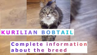 Kurilian Bobtail or Kuril Islands Bobtail. Pros and Cons, Price, How to choose, Facts, Care, History