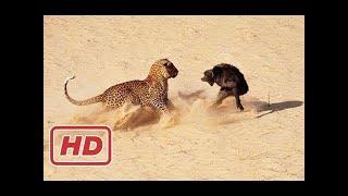 偉大な戦い▻▻ ライオンモンキー狩猟・キリン・ヒョウ・ヒヒ. 偉大な戦い...
