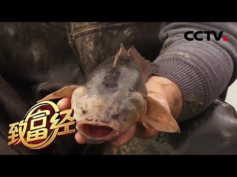 《致富经》跑步鱼 变色鱼 为两个男人赢得非凡财富 20190517 | CCTV农业