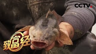 《致富经》 20190517 跑步鱼 变色鱼 为两个男人赢得非凡财富  CCTV农业