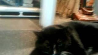 squishycat.3gp