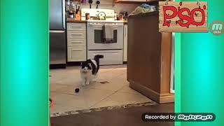 Приколы с котами С ОЗВУЧКАЙ