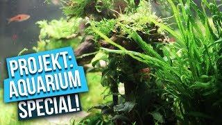 Entspannung für Fischfreunde - Projekt: Aquarium Special