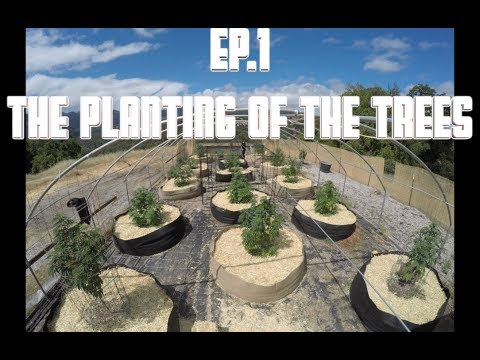 THE MOUNTAIN PROJECT -  EP. 1 (The Planting of The Trees)