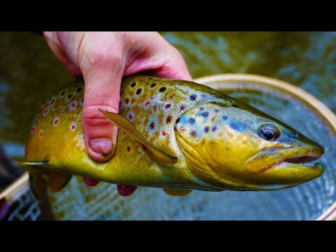 Fall Trout Fishing In Wisconsin Streams! (Inland)